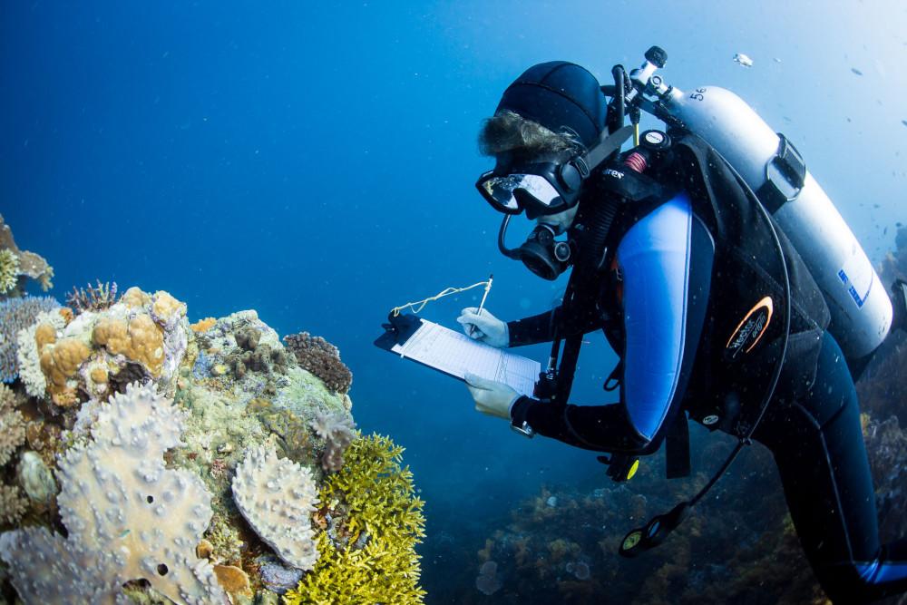 coral-reef-scientist